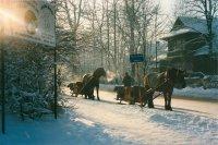 konie w Zakopanem